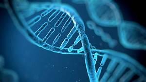 Cancer And Genetics - School Of Medicine
