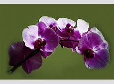 Orchid Trendy Advice For Beginners On Growing Orchids As