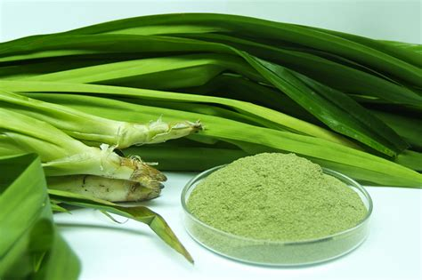 pandan leaf top benefits of pandan leaves for health and beauty