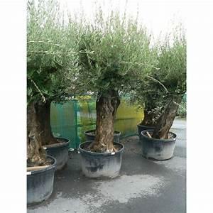Gros Pot Pour Olivier : vente d 39 olivier olea europaea bonsa ~ Melissatoandfro.com Idées de Décoration