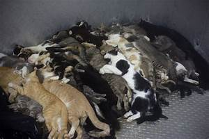 Please get your pets from shelters! (Warning : Sad ...