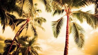 Palm Tree Desktop Wallpapers Iphone Wallpapertag Mobile