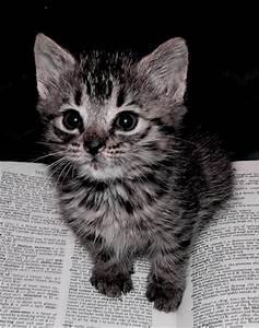 Smart Kitten by strawberryrepublic on DeviantArt