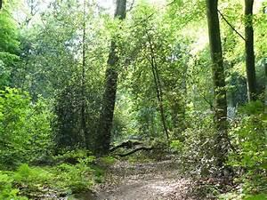 FileHülsenhaine im Schellenberger Wald Essen NRW Kennung E001 WDPAID 81954jpg