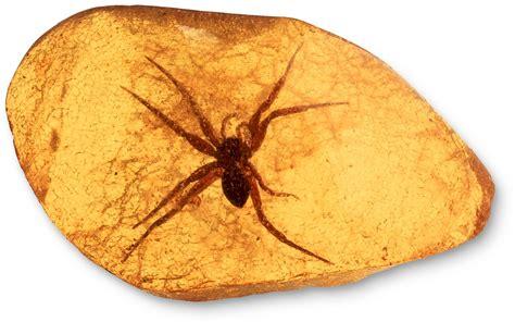 types  fossils amber fossils dk find