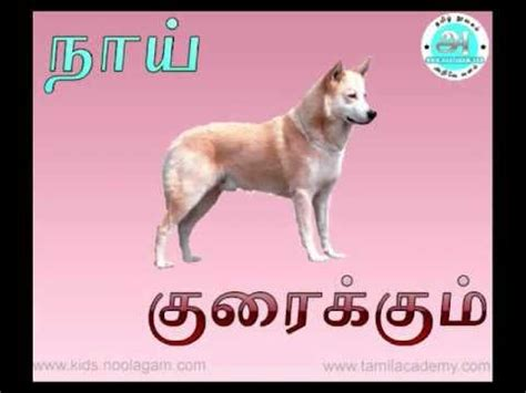animals sounds tamil youtube