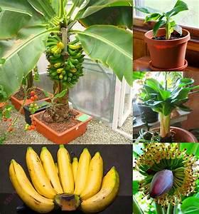 Arbres Fruitiers Nains En Pleine Terre : les 25 meilleures id es de la cat gorie arbres fruitiers ~ Premium-room.com Idées de Décoration