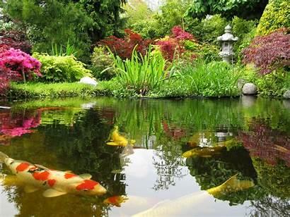 Koi Pond Ponds Island Residential Okeanos Aquascaping