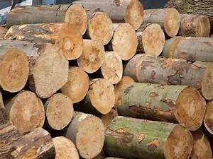 Brennholz Buche 25 Cm Kammergetrocknet : st mme buche kaminholz brennholz pellets ~ Orissabook.com Haus und Dekorationen