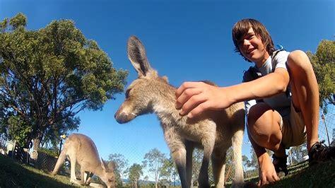 alec  wilderland australia part  youtube
