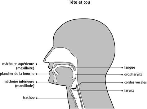 anatomie et physiologie de la cavit 233 buccale soci 233 t 233