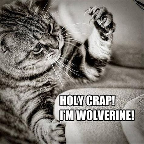 Holy Crap Meme - cat meme holy wolverine stuff to laugh at pinterest wolverines funny animal memes and