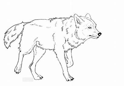 Wolf Lineart Ausmalbilder Malvorlagen Walk Drawings Wolves
