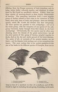 Returning to Darwin's Finches: A genetic explanation for ...