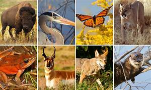 Quiz  What U2019s Your Wildlife Personality   U2022 The National