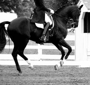 105 best Beautiful Dressage Horses images on Pinterest ...