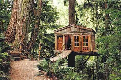 Treehouses : Tree Houses For Your Spouses