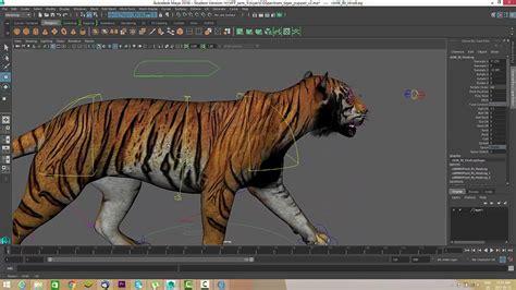 tiger walkcycle tutorial maya nav tutorials youtube