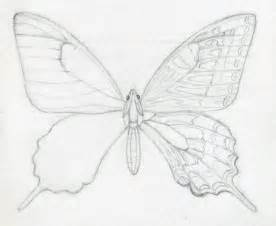How to Draw Butterfly Drawings