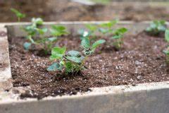 Hochbeet Bepflanzen Im 1 Jahr : wei kohlsorten die wichtigsten im berblick ~ Frokenaadalensverden.com Haus und Dekorationen