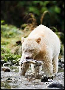 Native American Bear Spirit