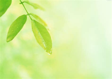 Green Leaf Wallpaper Wallpapersafari