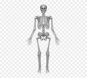 33 Label The Skeleton