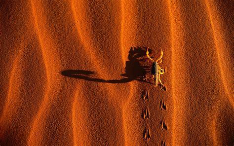 Scorpion Animal Wallpaper - scorpion animal wallpaper hd www pixshark images