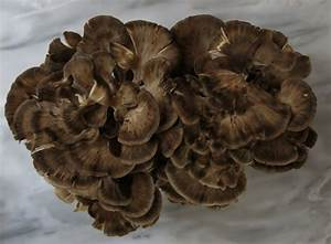 Pickled Hen Of The Woods Mushroom Recipe