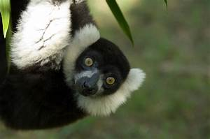 27 Pairs Of Sta... Cute Lemur Quotes