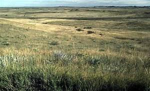 Tropical Grasslands Grasslands
