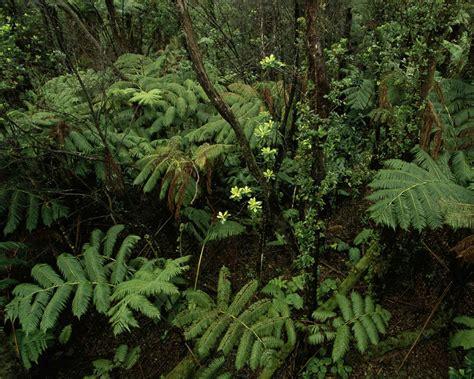Filewild Green Jungle Forest Scenicsjpg  Wikimedia Commons