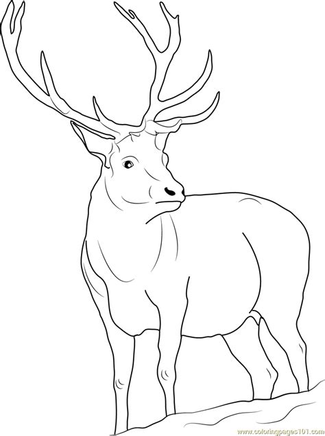 reindeer coloring page  deer coloring pages