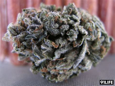 Marijuana Strain Reviews