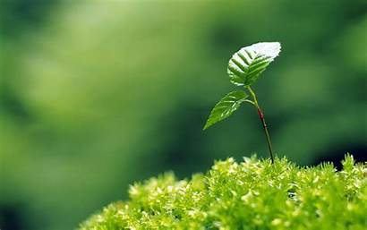 Plant Wallpapers Backgrounds Wallpaperaccess