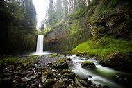 Oregon Forests Nature Landscape