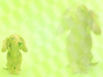 dog dachshund powerpoint templates