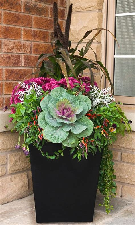Fall Container Gardening Flowers Ornamental Cabbage