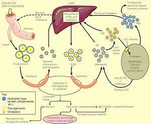 Ch24 Lipid Metabolism