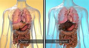 Organ Rejection When One Person Donates Part Of Their Liver To Someone Else