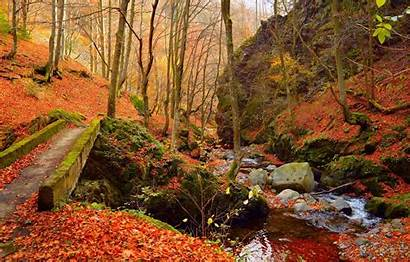 Autumn Foliage Fall Stream Wallpapers Colors Leaves