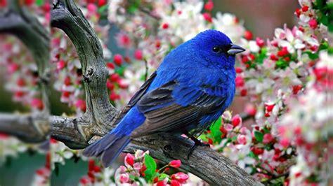 bird wallpaper screensavers  wallpapersafari