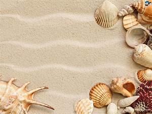 Seashell Wallpapers - Wallpaper Cave