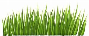 Grass cliparts