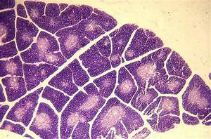 57 Best Images About   Histology  U0026 A U0026p Ii   On Pinterest