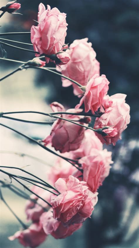 Find the large collection of 43000+ flower background images on pngtree. 15 stunning new flower wallpapers / backgrounds for your ...