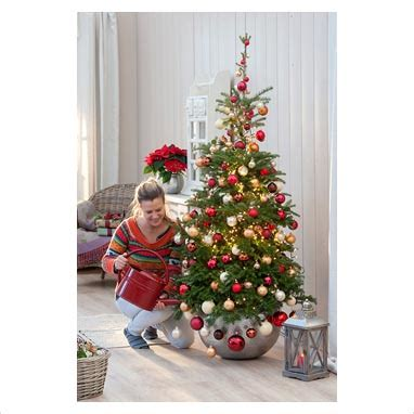 add to xmas tree water gap photos garden plant picture library adding water to tree in living