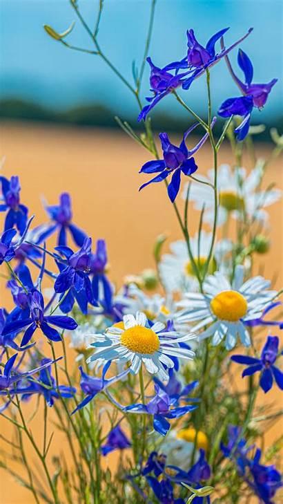 Flower Chamomile Field Consolida Bouquet Galaxy Sony