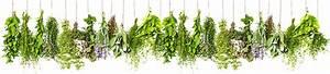 Piante Aromatiche E Officinali: Vivaio online piante aromatiche e officinali elenco offerte