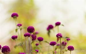 Purple Garden Flowers Wallpapers